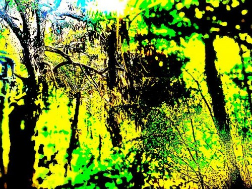 bushcom crop plas lofi